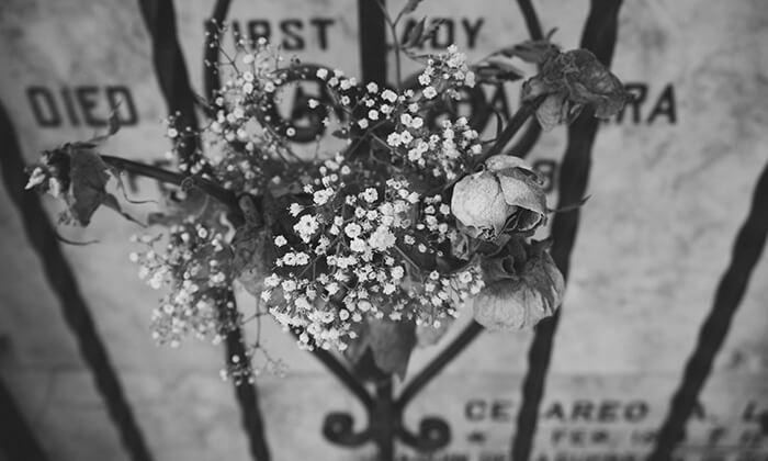 Иерихонская роза